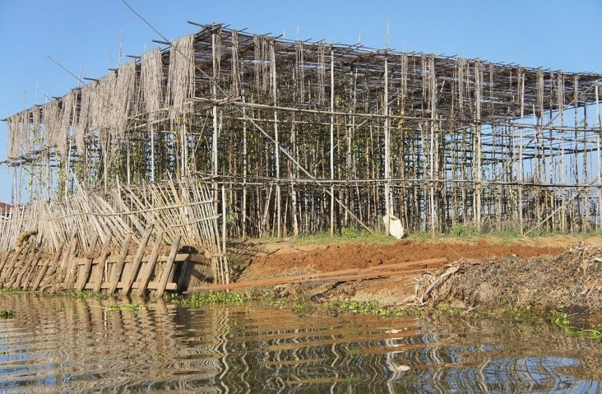 A Guide to Bamboo Scaffolding: What It is, Usage, Strength & More